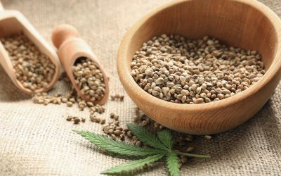 Eating hemp seeds during pregnancy: What you should know