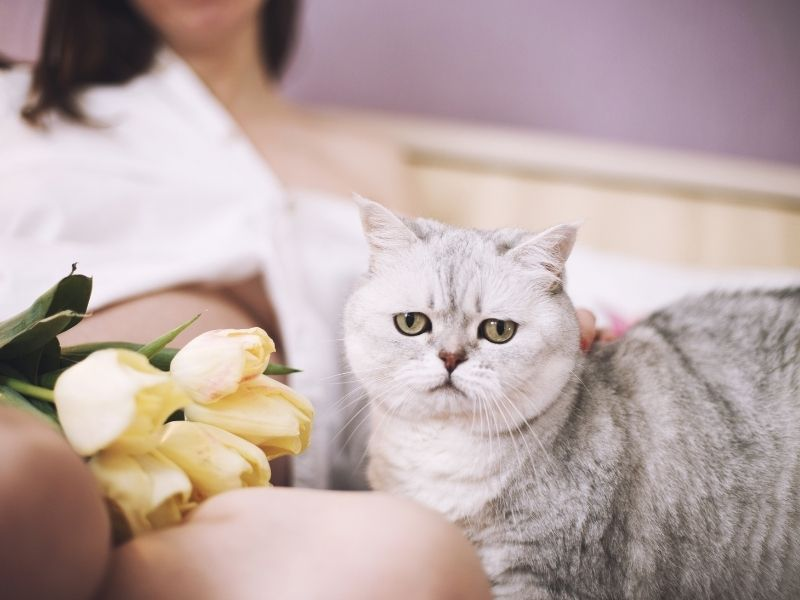 Can Cats Sense Pregnancy in Soon-to-Be Mommies?