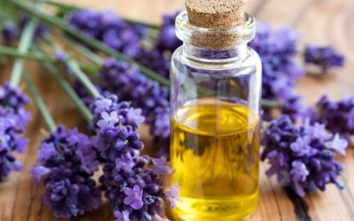Using Lavender Oil During Pregnancy: Everything You Need to Know